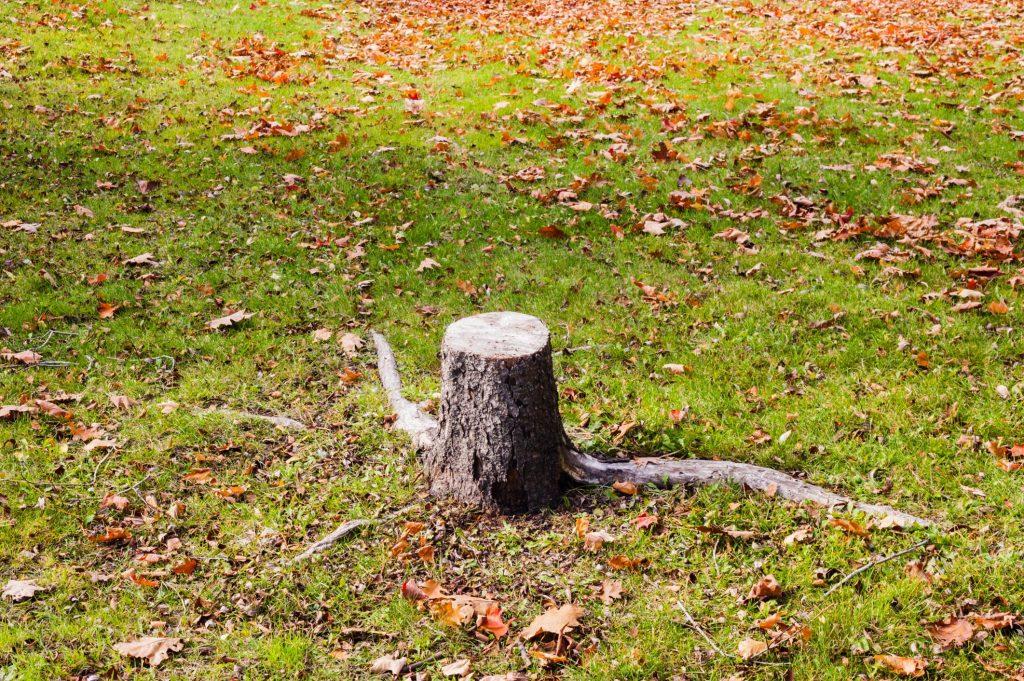 Kyle Tree Trimming - Stump Grinding 1