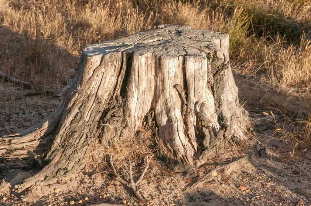 Kyle Tree Trimming - Stump Grinding 2