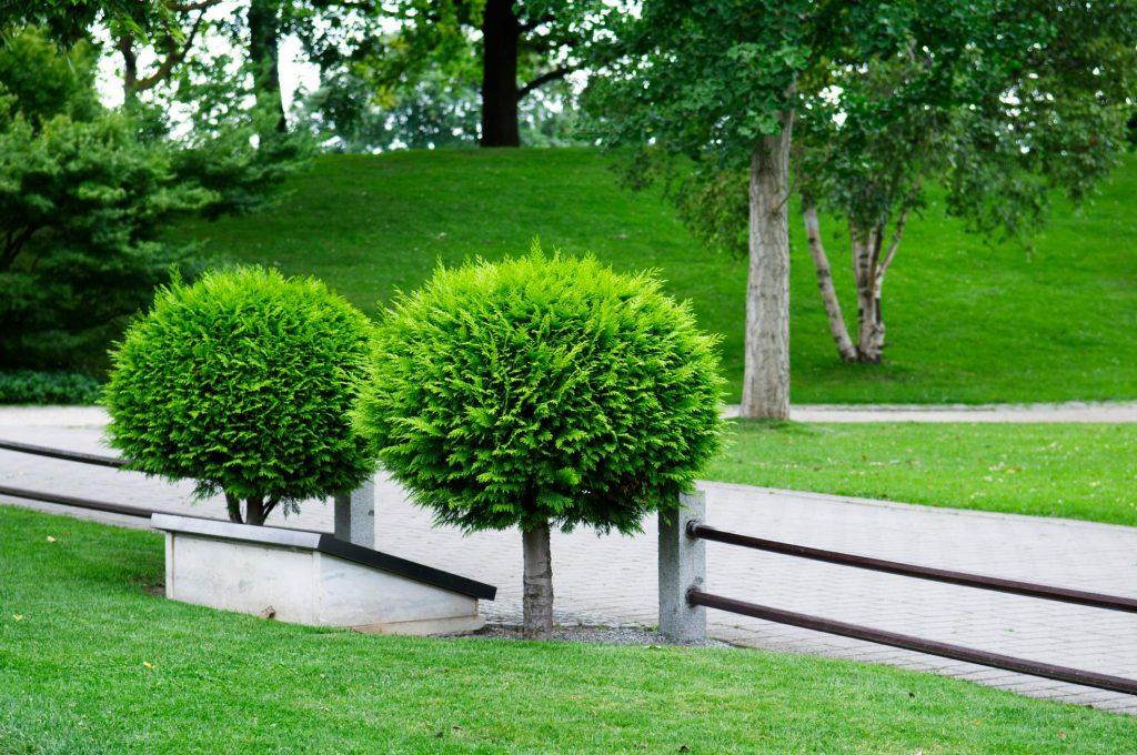 Kyle Tree Trimming - Tree Care 2