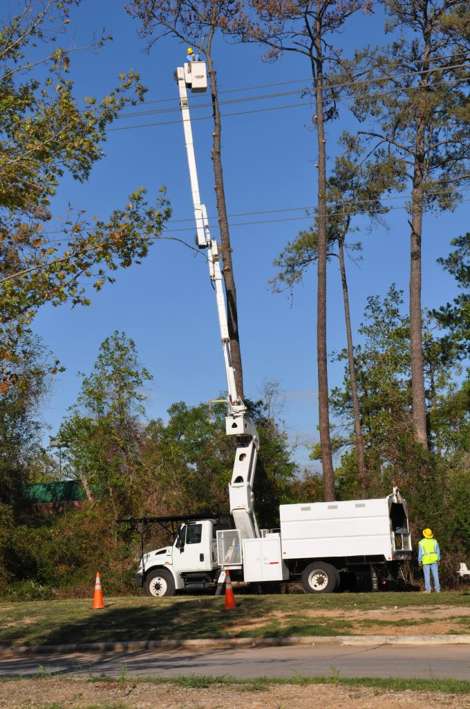 Tree Trimming Kyle TX