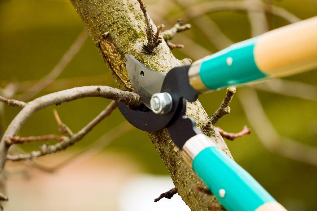 Kyle TX Tree Pruning