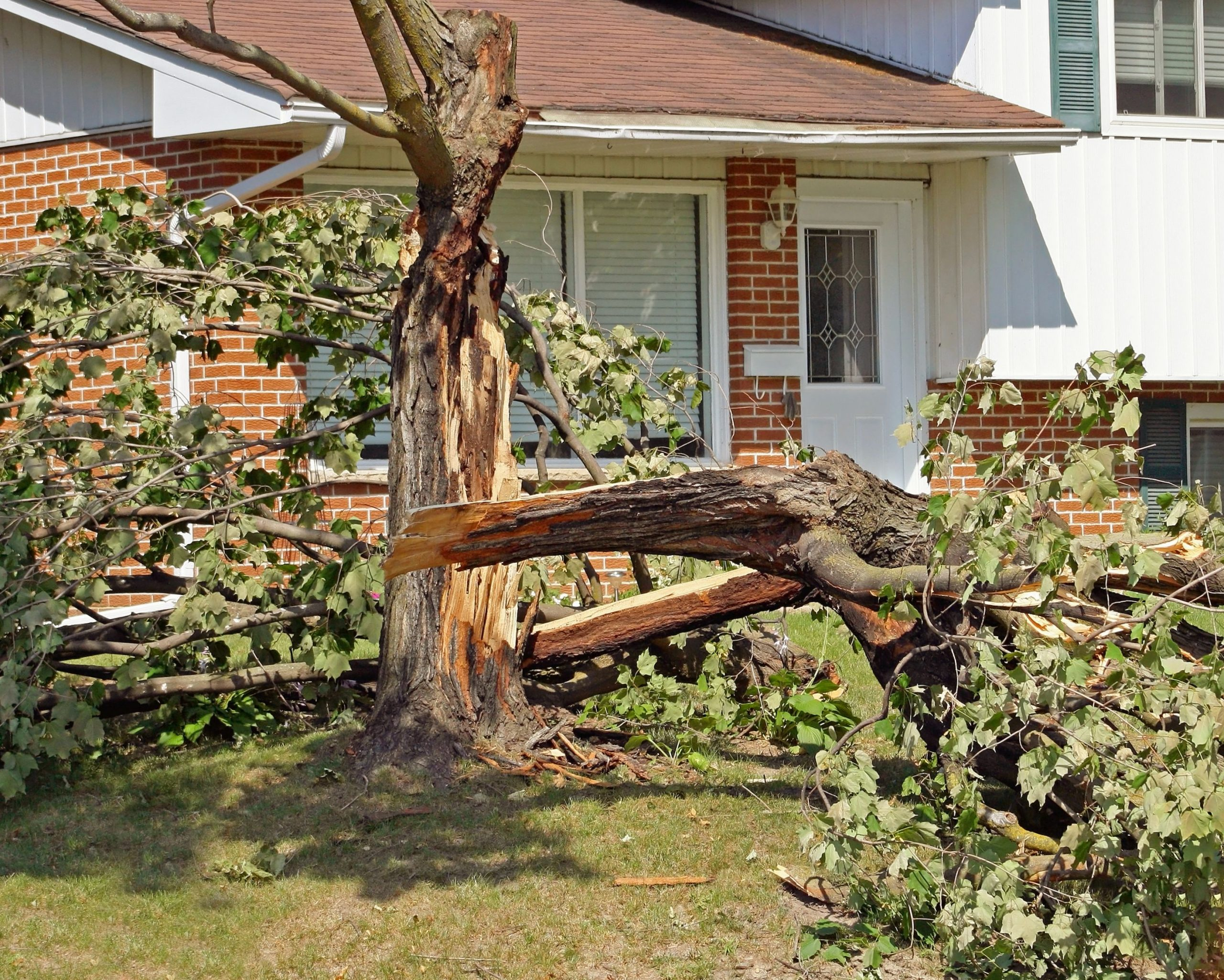 Tree Removal Kyle TX