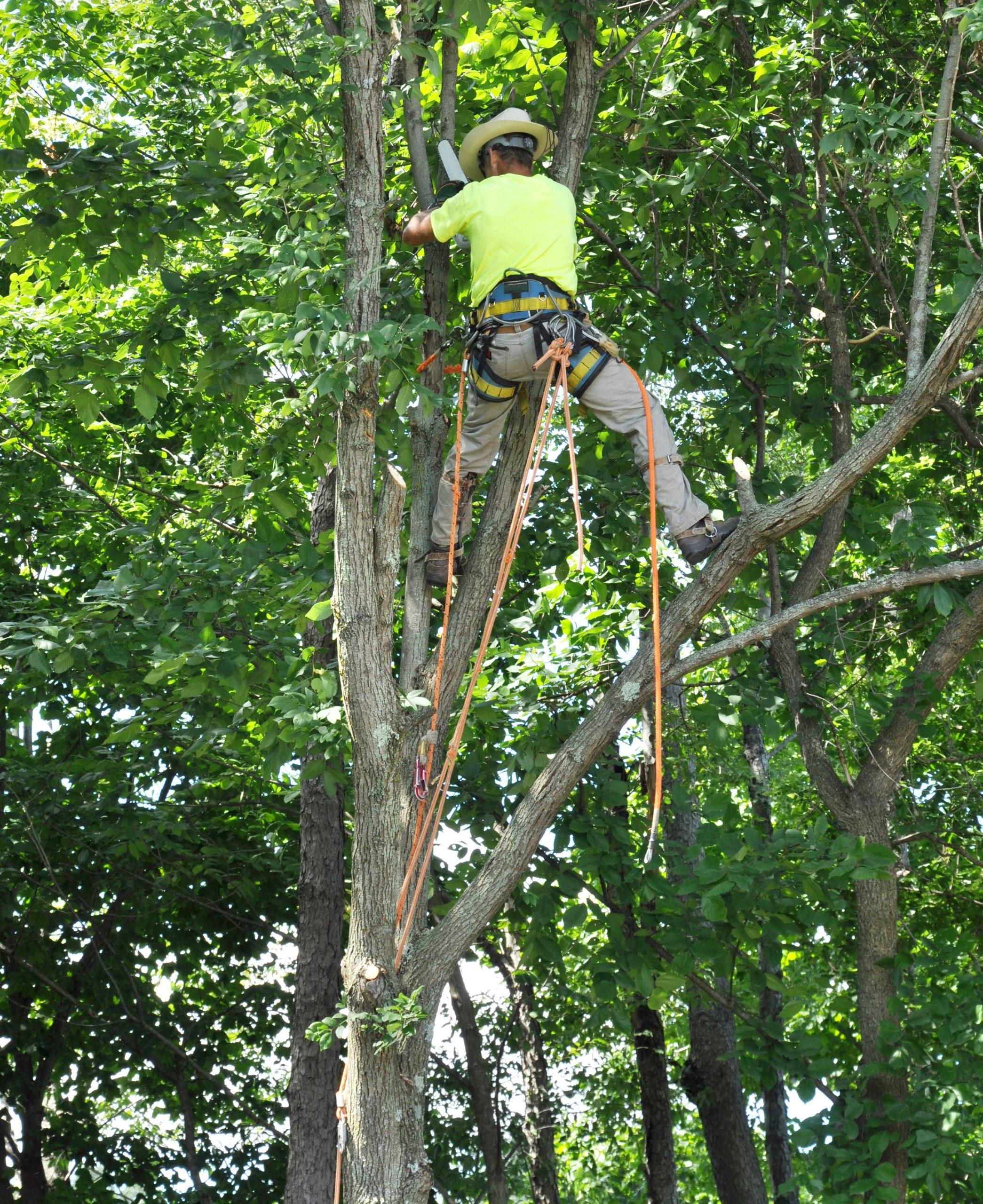 Tree Care Kyle TX