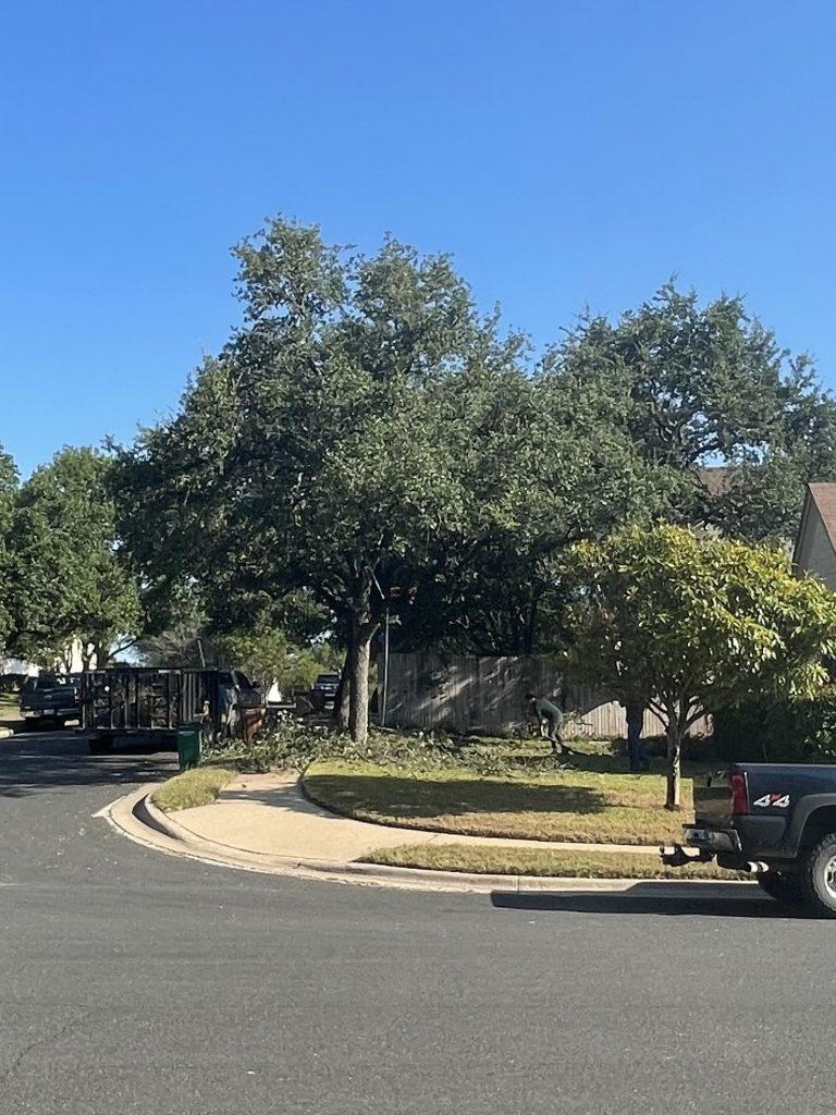 Tree Trimming Buda TX