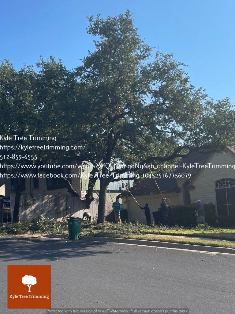 Tree Trimming Austin TX